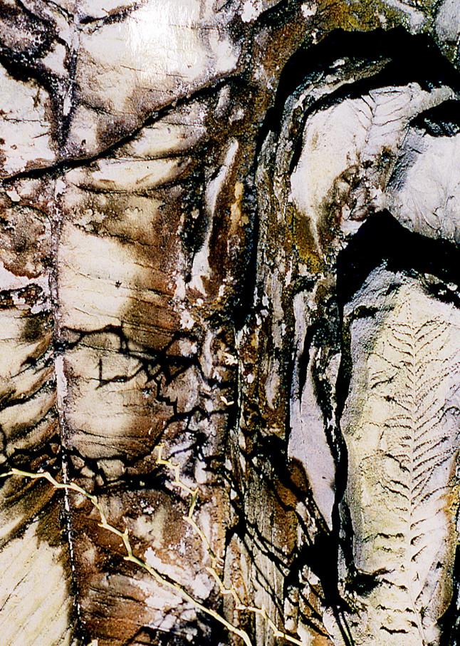 Brooklyn Botanic Abstract Fossil Plant Print – Sherry Mills