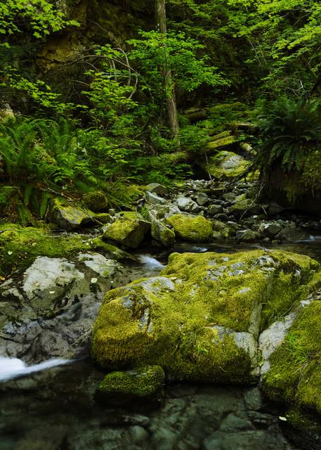 Galena Creek, Washington, 2020