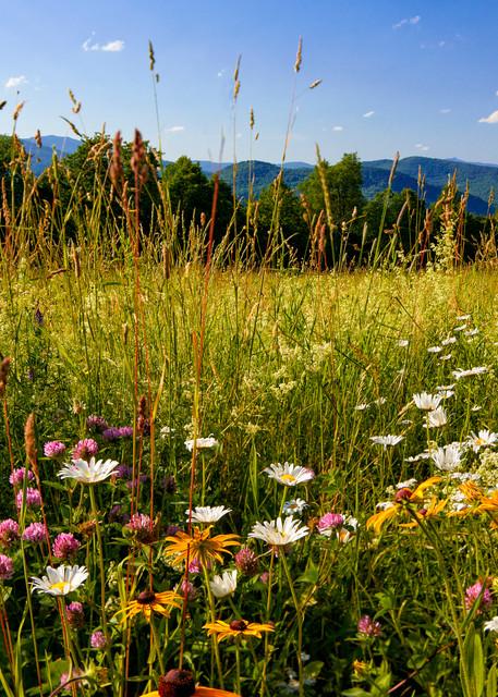 Fuller Hill Wildflowers