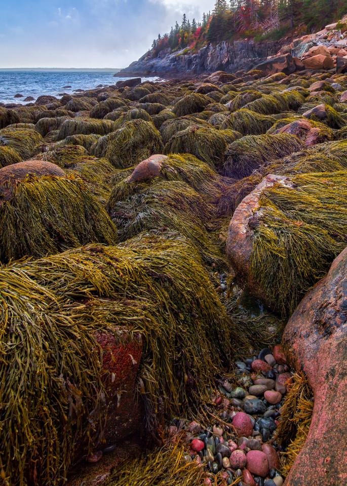 Seaweed Monsters