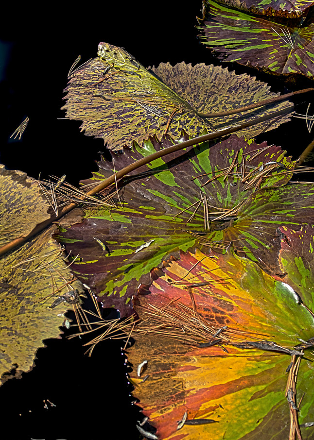 Mother Nature's Colors by Terry Rosiak