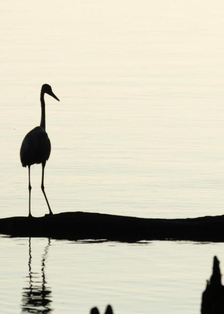 Early Morning Fishing     Blue Heron Silhouette 7521 Art | Koral Martin Fine Art Photography