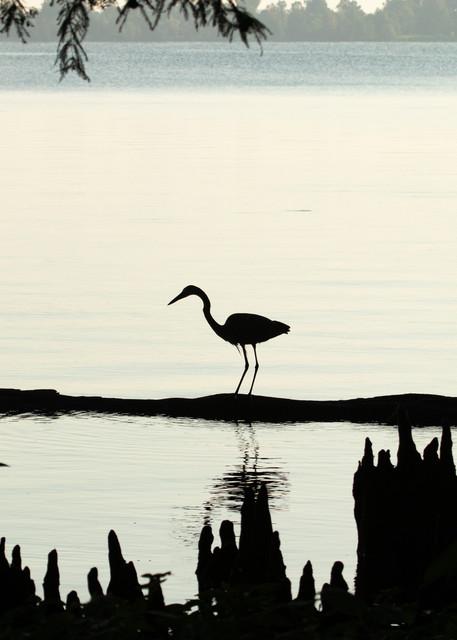 Early Morning Fishing     Blue Heron Silhouette 7517 Art | Koral Martin Fine Art Photography