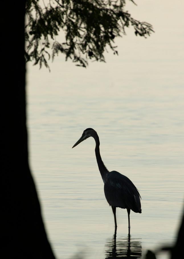 Early Morning Fishing     Heron Silhouettes 7532 Art   Koral Martin Fine Art Photography