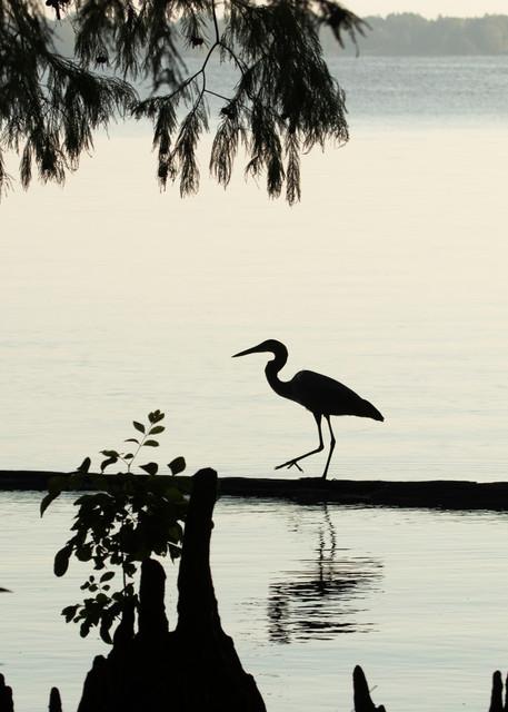 Early Morning Fishing     Heron Silhouettes 7528  Art | Koral Martin Fine Art Photography