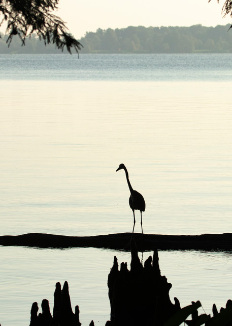Heron Silhouettes  7509  Photography Art | Koral Martin Healthcare Art