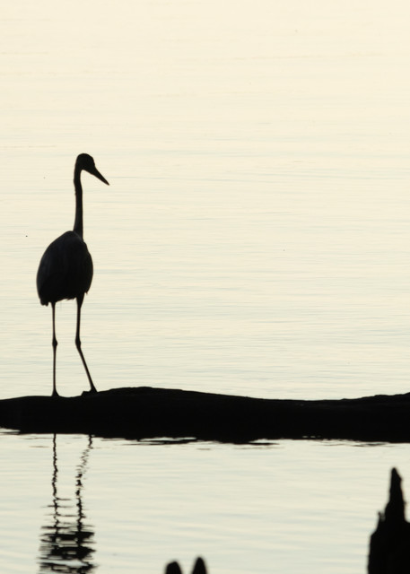 Heron Silhouettes  7521  Photography Art | Koral Martin Healthcare Art