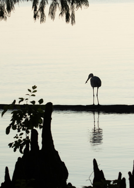 Heron Silhouettes  7526  Photography Art | Koral Martin Healthcare Art