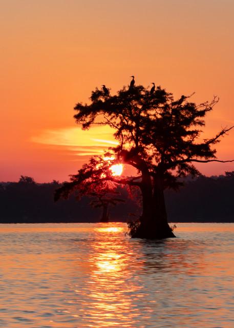 Sunsize Cormorant Tree Sun Lower G  8482  Photography Art | Koral Martin Healthcare Art