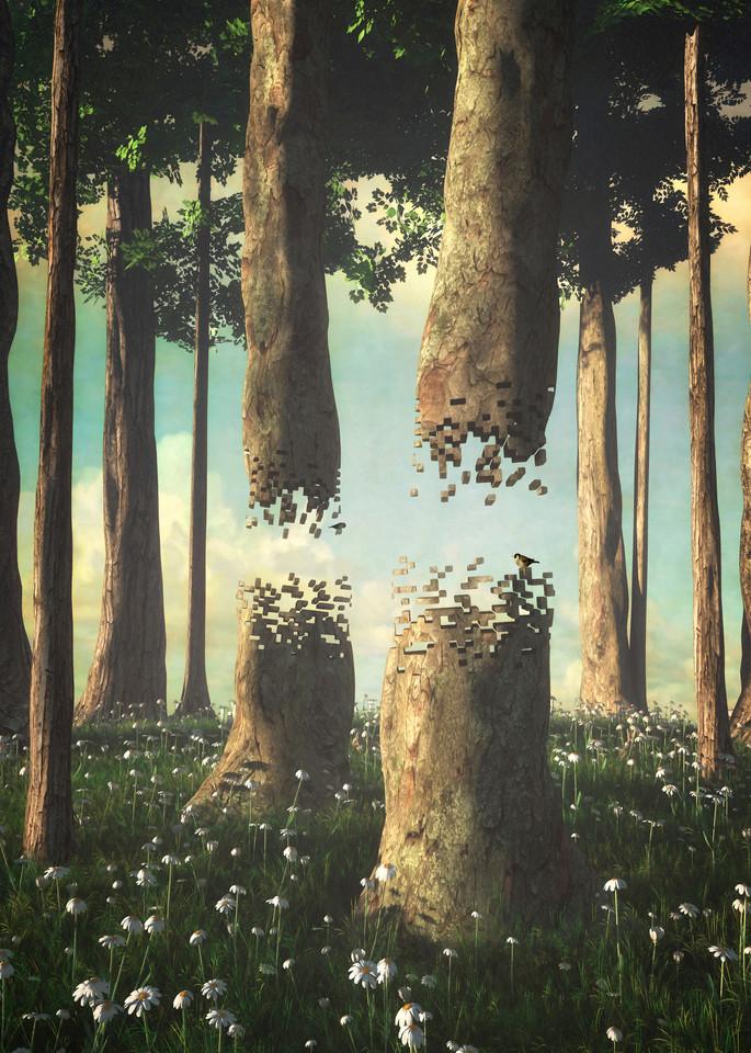 Fragmentary Forest | Cynthia Decker