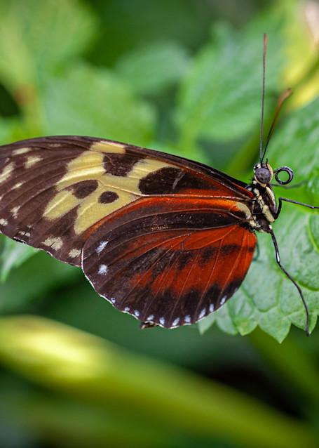 Butterfly 12 Photography Art | Cardinal ArtWorks LLC