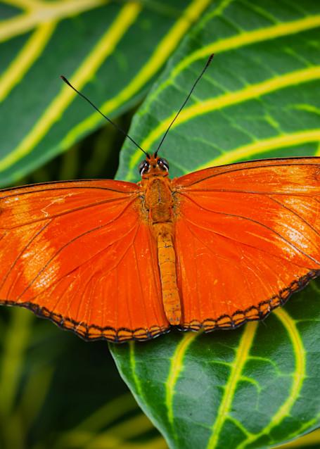 Butterfly 13 Photography Art   Cardinal ArtWorks LLC