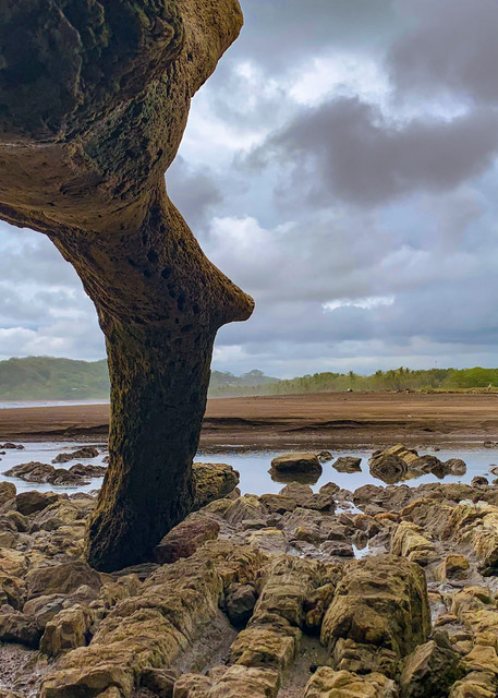 Beach Wood  Photography Art   Alex Nueschaefer Photography