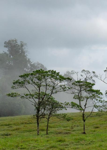 Cloud Forest  Photography Art   Alex Nueschaefer Photography