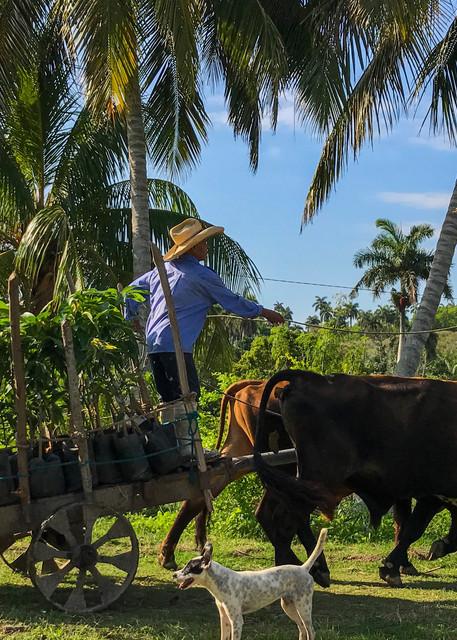 Cuban Mango Farmer  Photography Art | Alex Nueschaefer Photography