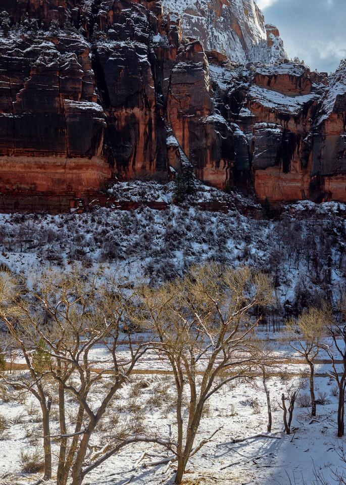 Sunlit Trees in a Snowy Virgin River Meadow