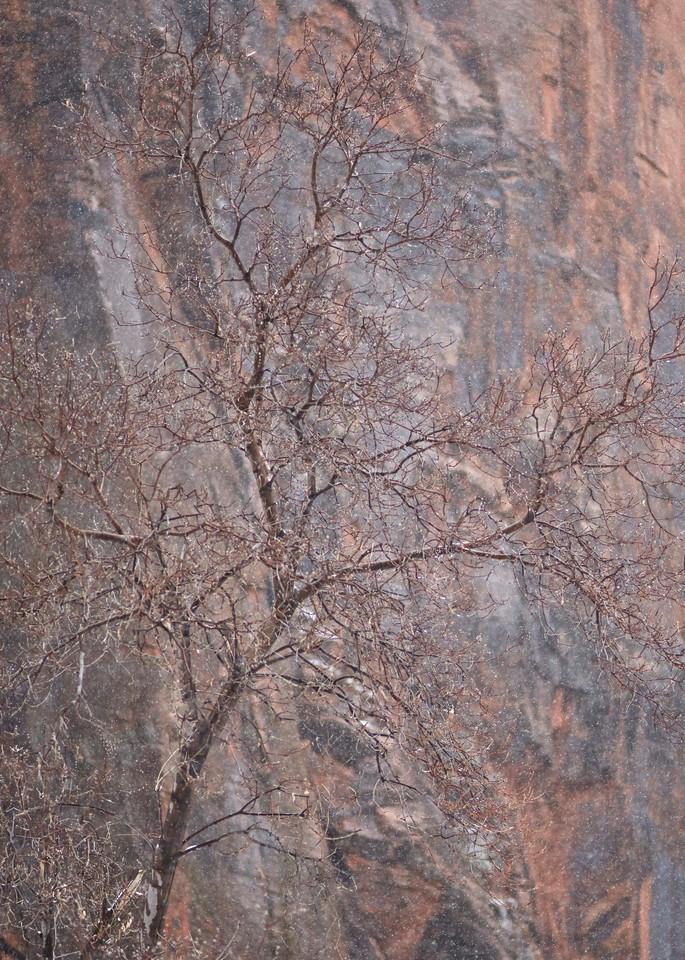 Sinawava Tree