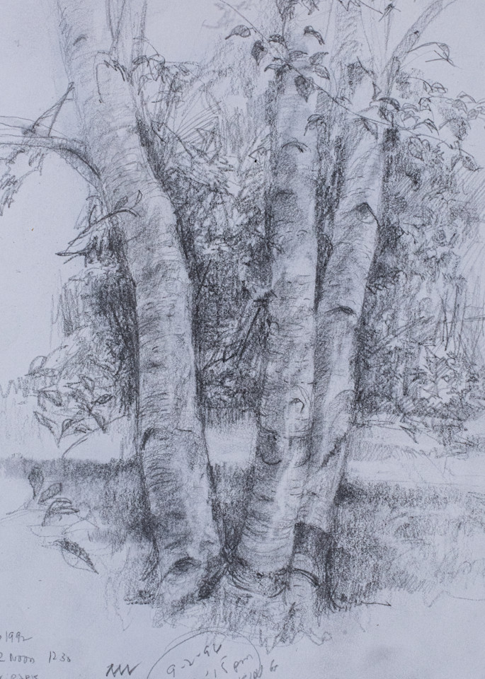 Birches, Pencil Sketch, 1992 Art | Roost Studios, Inc.