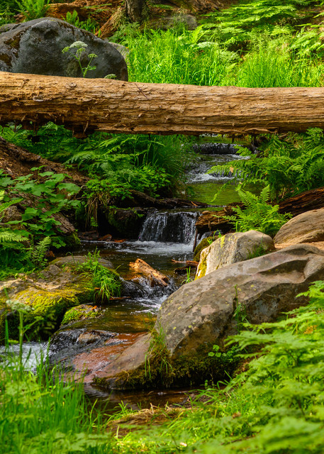 Dorst Creek  Sequoia Photography Art | Casey McFarland Photography
