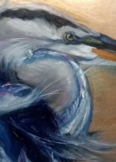 Great Blue Heron Portrait Art | Nosco Fine Art