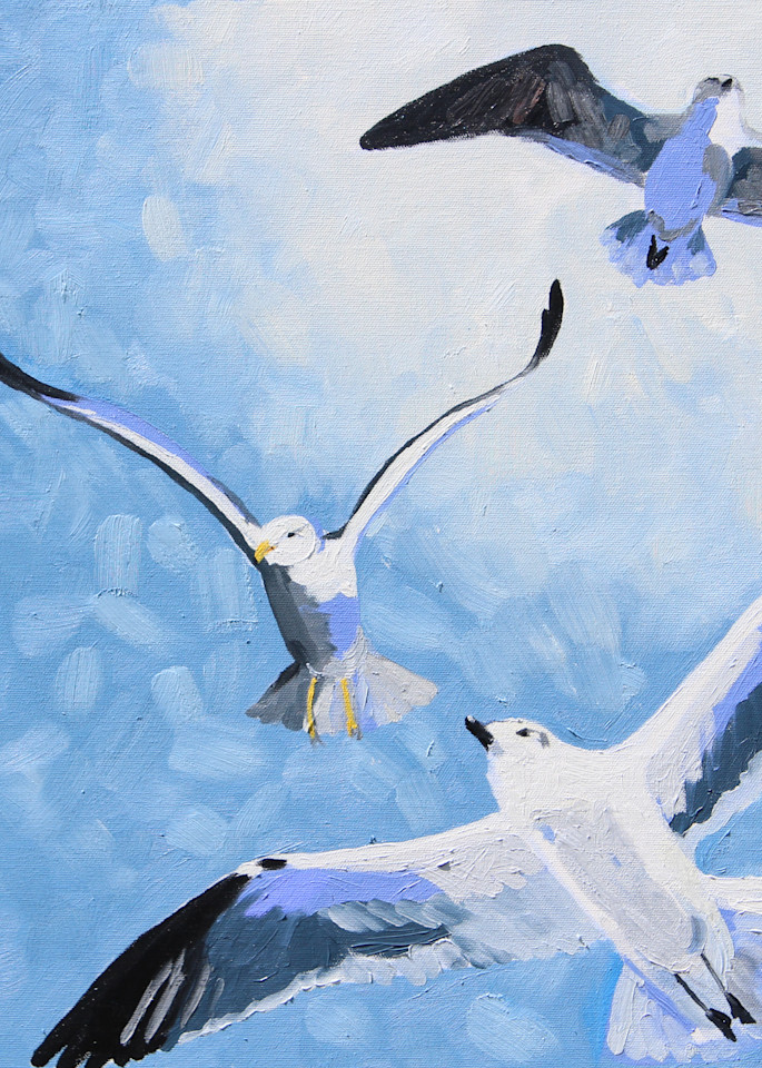 Gull Frenzy II