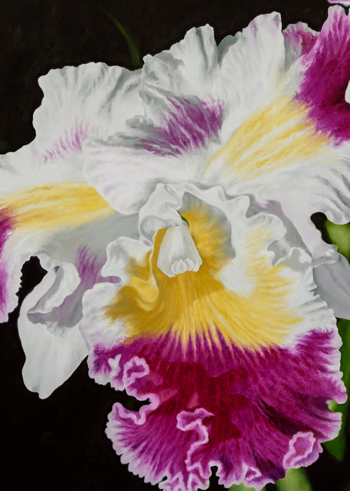 Orchid   Prints Art   Mercedes Fine Art