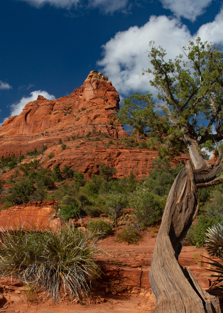 Red Rock Landscape Near Sedona, Arizona Art | karenihirsch