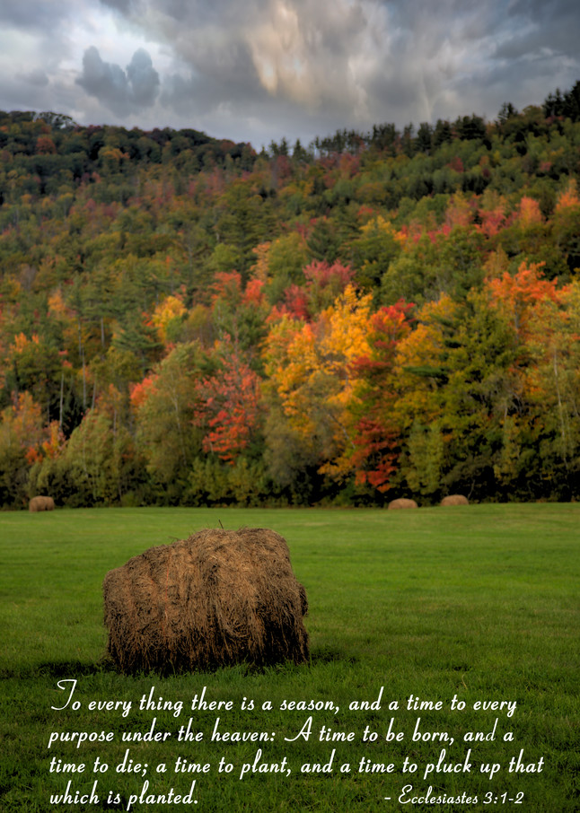 There Is A Season: Shop prints | Lion's Gate Photography