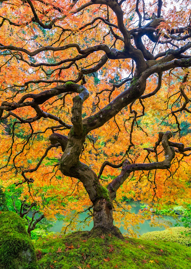 Fire Tree Photography Art | Vldn Taylor Photography