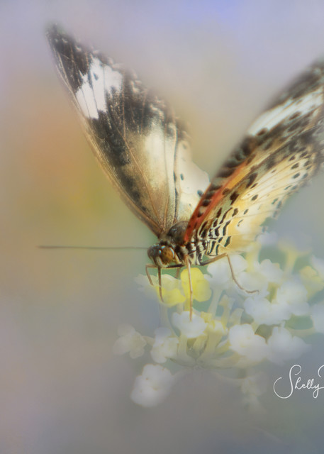Floral Butterfly Photography Art | Shelly Priest Photography