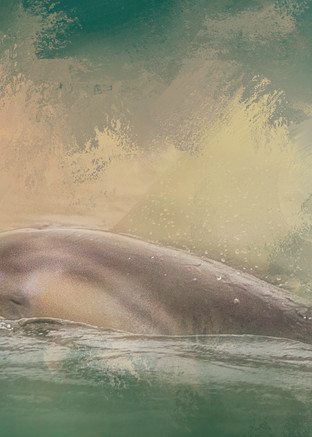 Pacific White Sided Dolphin Photography Art | Shelly Priest Photography