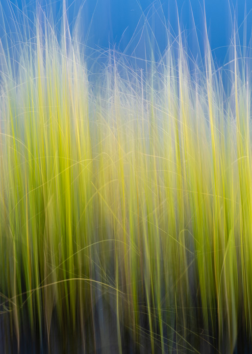 Pond grass motion blur