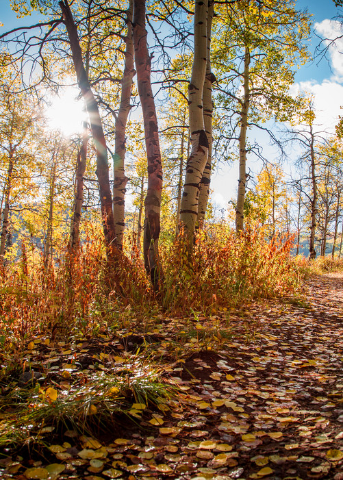 Fall Leaves Autumn Landscape Wall Art Home Decor Photography Colorado