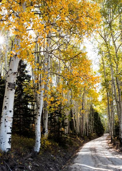 Last Dollar Road Telluride Colorado Aspen Leaves Autumn Fall Colors