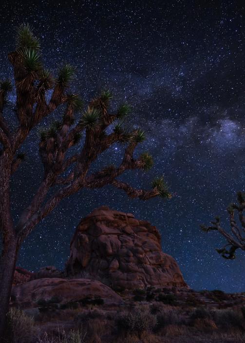 Joshua Tree Starlight Photography Art | Josh Kimball Photography