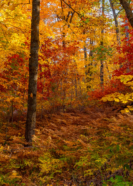 Itasca - Autumn Forest, photograph by Jeremy Simonson