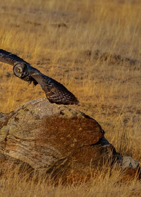 Stealth Photography Art | McKendrick Photography