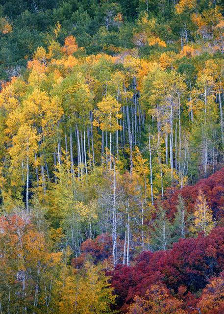 Aspen Autumn | Shop Photography by Rick Berk