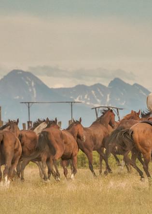 Should'a Ben A Cowboy  Photography Art | JL Grief Fine Art Photography