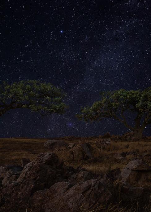Starry Oak Solitude Photography Art | Josh Kimball Photography