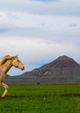 The White Stallion Photography Art   Brokk Mowrey Photography