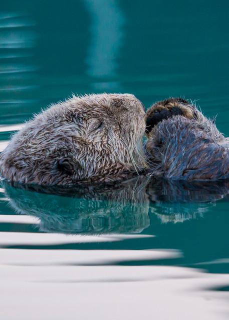 Fine Art Photography Sea Otter Sleeping