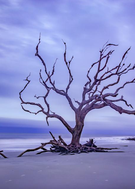 Driftwood Beach Sunrise | Susan J Photography