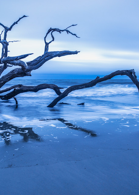 Sunrise Driftwood Reflections   Susan J Photography