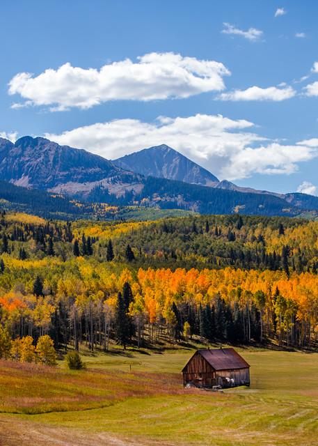 Fall Tree and Barn Image in Ridgway Colorado