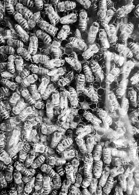 Honey Bees Photography Art | Julie Williams Fine Art Photography