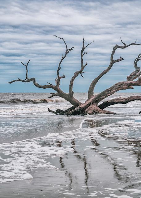 Driftwood Reflections   Susan J Photography
