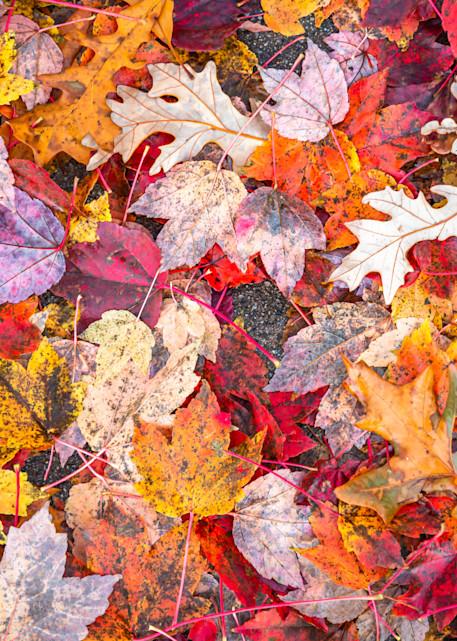 Fall Fun | Susan J Photography