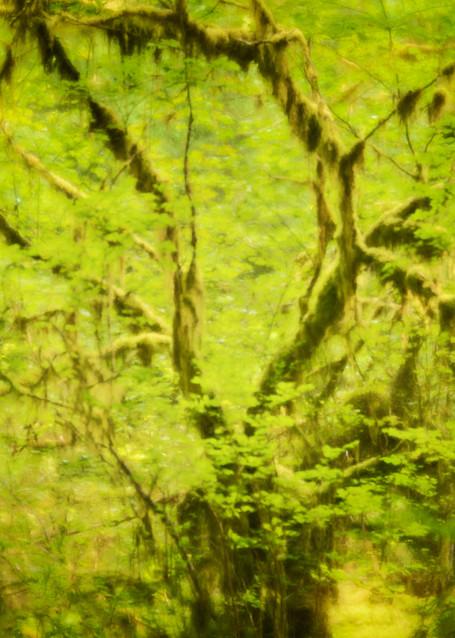 Welcome to Fairyland Rain Forest Fine-Art Print
