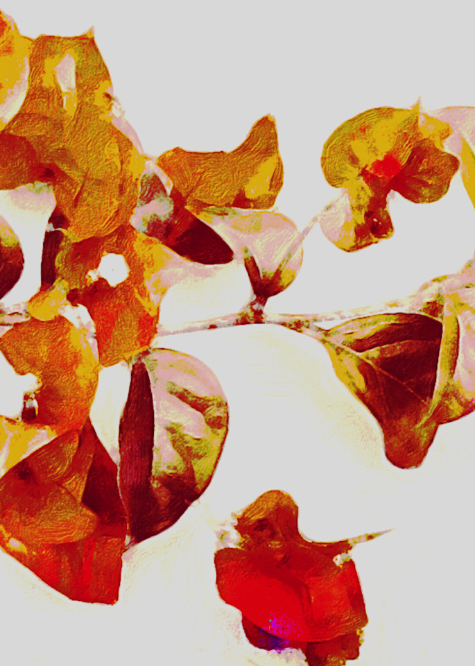 Vif Photography Art | Artscapes by Renee